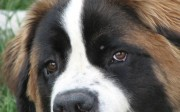 my-dog-1369512-1280x960
