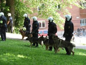 Swedish_police_dogs